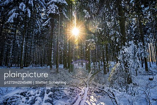 Snow In The Woods - p1272m2245486 by Steffen Scheyhing