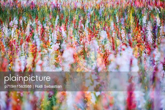 p719m1563588 by Rudi Sebastian