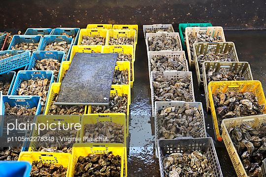 France, Arcachon basin oysters - p1105m2278348 by Virginie Plauchut