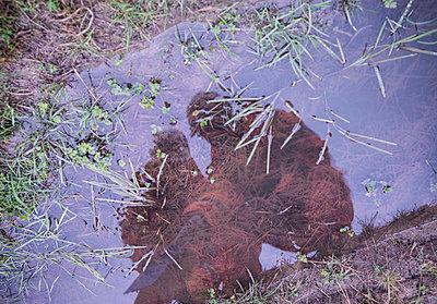 Ecologists examining dirty pond - p429m757698f by Monty Rakusen