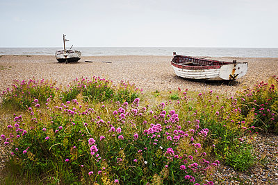 Red Valerian growing on beach, fishing boats lying mid distance. - p1100m1490120 by Mint Images