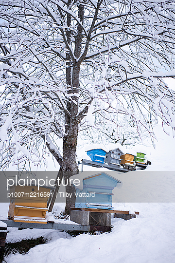 France, Beehives in winter - p1007m2216591 by Tilby Vattard