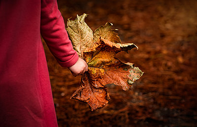 Child holds giant fall autumn leaf in hand close-up - p1166m2137068 by Cavan Images