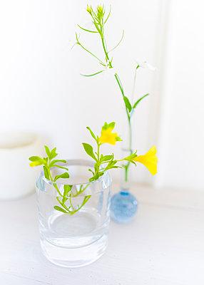 Yellow flower in glass vase - p1510m2057825 by Ingrid Amenda