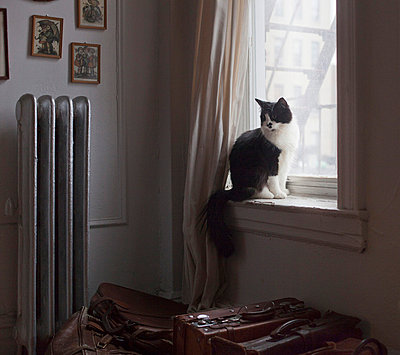 Cat on window sill - p956m709701 by Anna Quinn