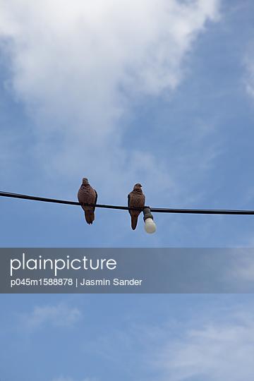 Tauben-Pärchen sitzt auf Kabel - p045m1588878 von Jasmin Sander