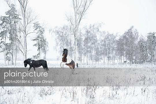 p301m2018914 von Julia Christe