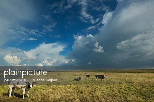 plainpicture - plainpicture p429m2023165 - Thunderstorms travelling ov... - plainpicture/Cultura/Mischa Keijser