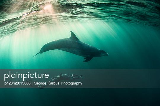 p429m2019803 von George Karbus Photography