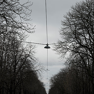 Tree avenue with street lamps - p1383m2100710 by Wolfgang Steiner