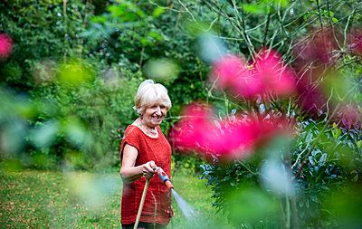Senior woman watering her garden with garden hose - p300m2275683 by Maria Maar