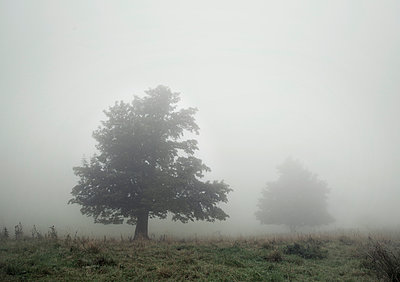 Fog - p992m946230 by Carmen Spitznagel