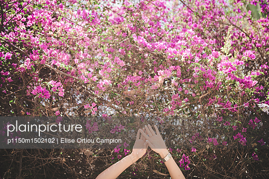 Hands and Bougainvillea - p1150m1502102 by Elise Ortiou Campion