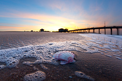 Shell on beach near pier at sunrise - p343m1475703 by Sean Davey