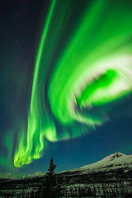 Aurora borealis over trees along the Denali Highway east of Cantwell, Alaska. - p442m1139131 by Carl Johnson
