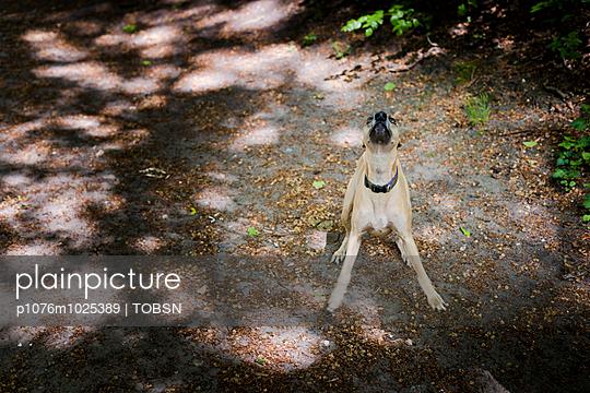 Hund im Wald - p1076m1025389 von TOBSN