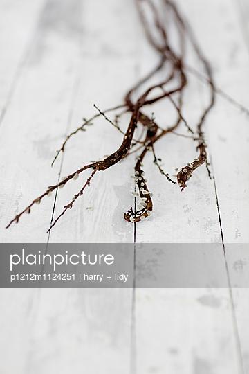 Drachenweide mit Weidenkätzchen auf Holzbretter - p1212m1124251 von harry + lidy