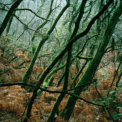 Wald in Talmont Saint Hilaire I - p1097m882144 von Mélanie Bahuon