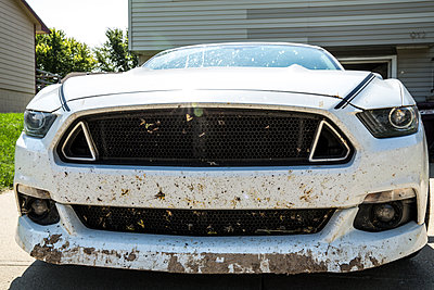 Dirty Ford Mustang - p1291m1465567 by Marcus Bastel
