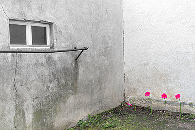 Plastic flowers in the backyard - p1625m2273236 by Dr. med.