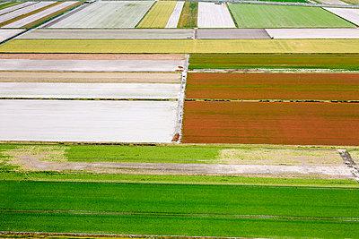 Flower farm - p1120m925617 by Siebe Swart