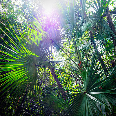 Sunlight shining through fronds - p1427m2146975 by Tetra Images