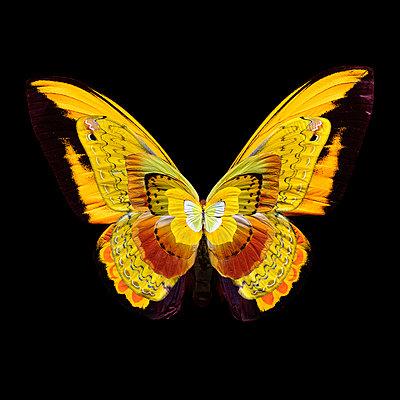 flying yellow - p587m1575107 von Spitta + Hellwig