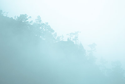 Cloud forest - p958m1113113 by KL23