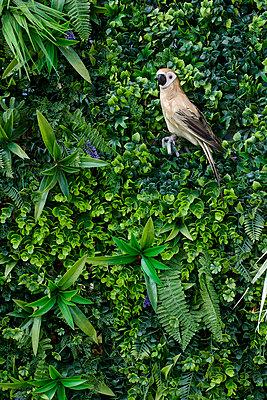 Bird figure as decoration on hedge - p1164m2273054 by Uwe Schinkel