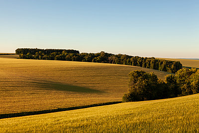 Nature  - p873m2193388 by Philip Provily