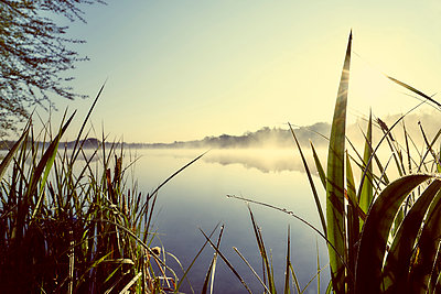 Grasses at the lake in the back light - p1312m2275836 by Axel Killian