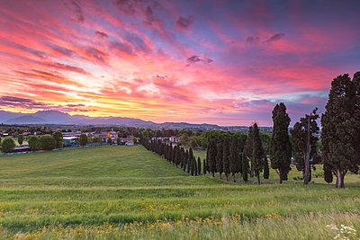 Sunrise on Viale dei Cipressi, Inverigo, Brianza, Como province, Lombardy, Italy - p651m2032992 by Alessio Giovacchini