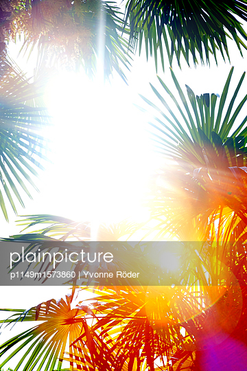 Palm trees in backlight - p1149m1573860 by Yvonne Röder