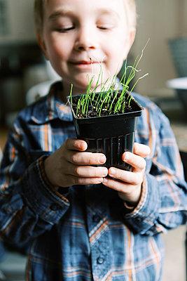 Little boy growing little leeks for the season. - p1166m2174294 by Cavan Images