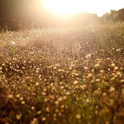 Late summer - p1240m1057448 by Adeline Spengler