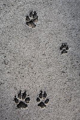 Pfotenabdrücke - p695m892044 von Rui Camilo