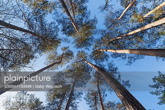 p300m1153948 von Gaby Wojciech