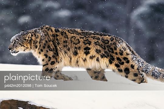 p442m2012098 von Tom Soucek
