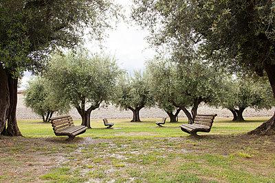 Park mit Olivenbäumen - p435m887507 von Stefanie Grewel