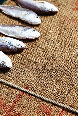 Fischköpfe - p2370714 von Thordis Rüggeberg