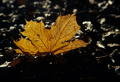 Autumn - p9791383 by Opelka