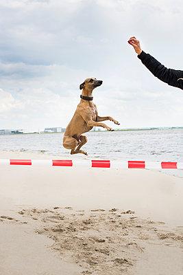 Jump - p1076m1025394 by TOBSN