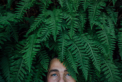 Eyes Peeking out of Ferns - p1262m1082808 by Maryanne Gobble