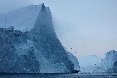 Eisberge mit Nebel und Möven - p719m1181430 von Rudi Sebastian