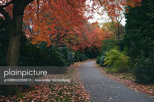 Path at a graveyard - p1696m2293013 by Alexander Schönberg