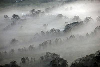 Lüneburger Heide; Morgennebel - p1016m741983 von Jochen Knobloch