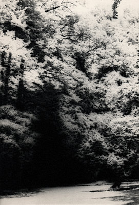 Thick forest, Palace garden, Düsseldorf - p1677m2258953 by nina e. reiter