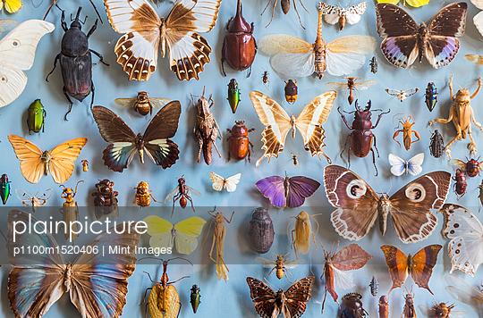 p1100m1520406 von Mint Images