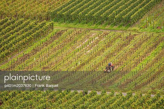 Traktor im Weinberg - p401m2037630 von Frank Baquet