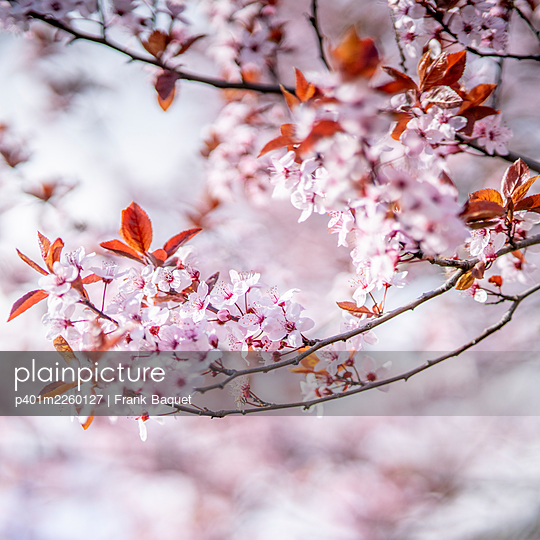 Spring blossoms - p401m2260127 by Frank Baquet